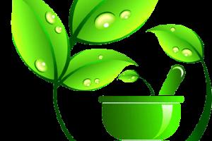 Здоровьесберегающие и здоровьеформирующие технологии в ДОУ (25.10.2018 г. стажировка) г. Зима