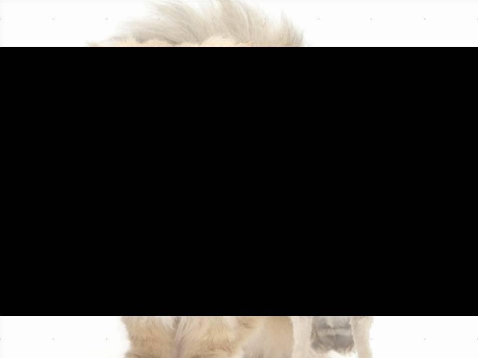 Кацурба Татьяна Владимировна. Средство самоконтроля на урока физической культуры в начальной школе.